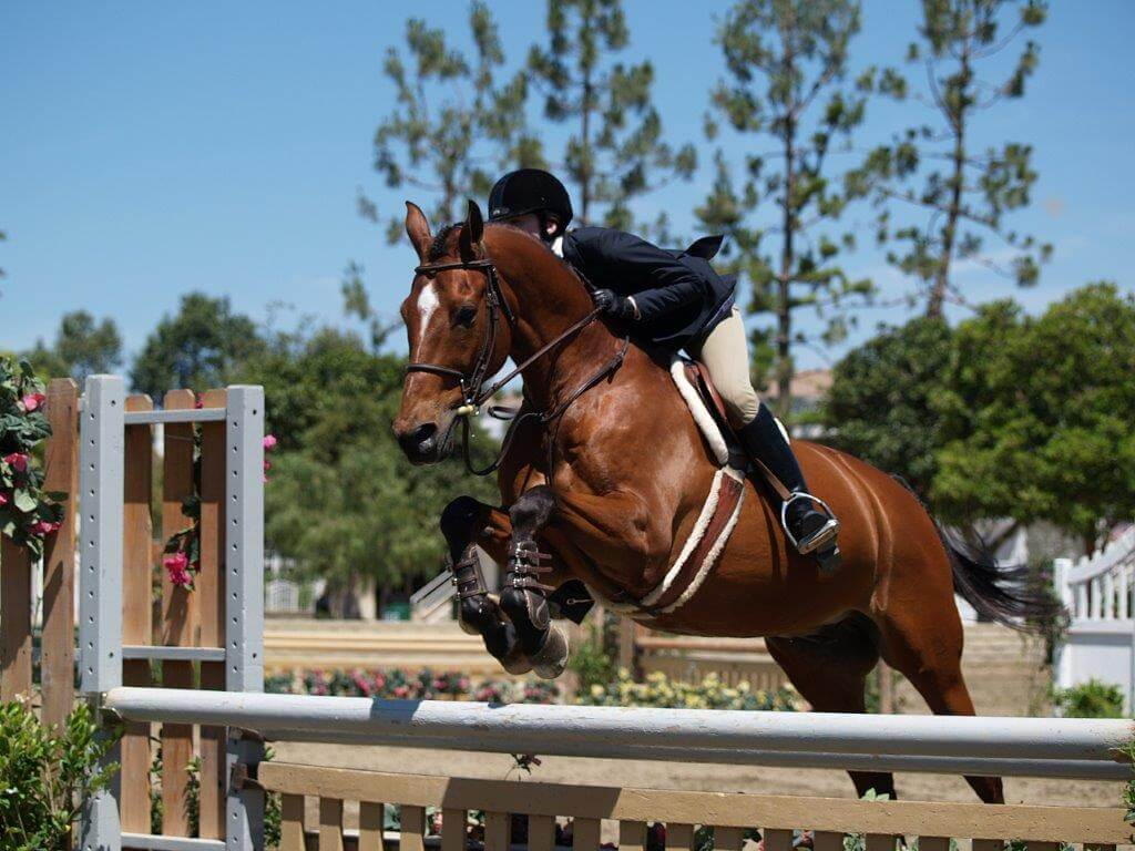 Venues Thoroughbred Classic Horse Show
